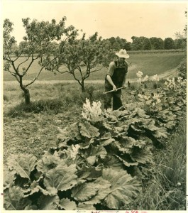 Farming in Trumbull County, from the Ohio Guide Collection via Ohio Memory.
