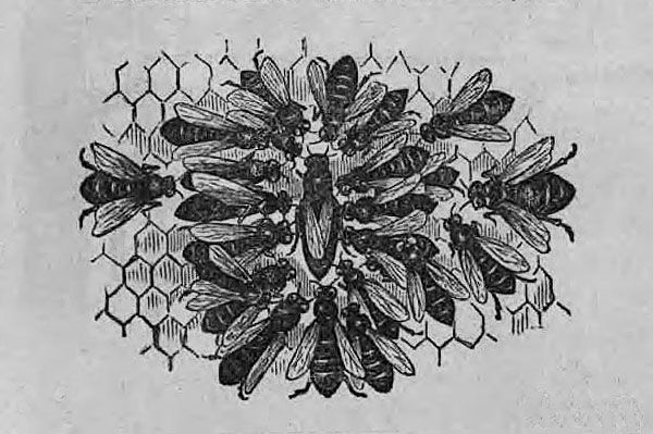 """Illustration from the title page of """"A Practical Treatise on the Hive and Honey-Bee,"""" courtesy of the State Library of Ohio Rare Books Collection on Ohio Memory."""