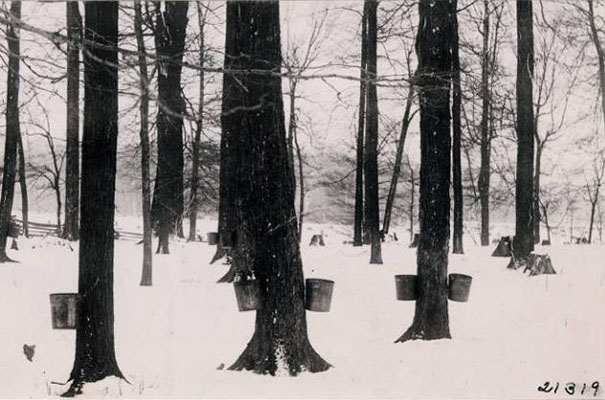"""""""Part of R. O. Hinsdale's sugar camp,"""" via the Ohio Guide Collection on Ohio Memory."""