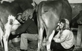 Couple milking dairy cows in Wooster, Ohio, 1952. Via Ohio Memory.